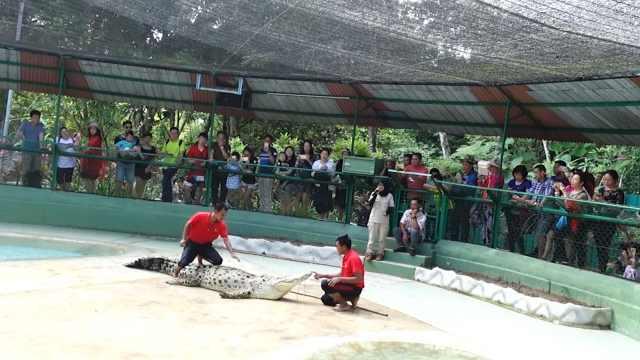兰卡威鳄鱼公园,喂鳄鱼看鳄鱼表演