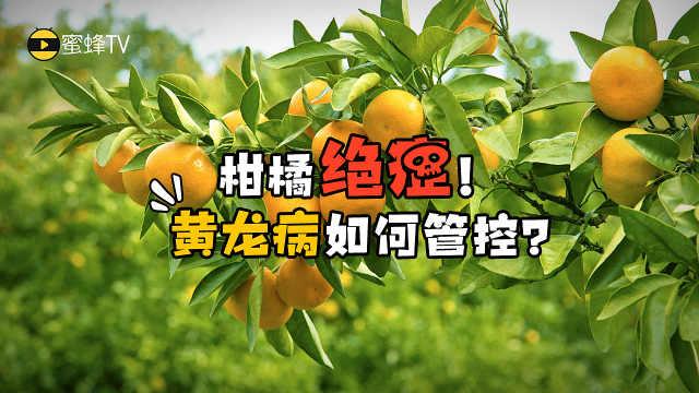 """果农注意!柑橘黄龙病""""克星""""驾到"""