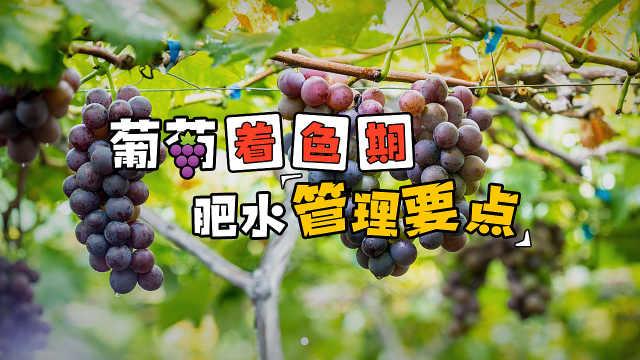 葡萄着色期如何合理施肥?