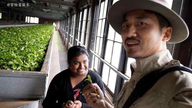 雷探長參觀斯里蘭卡茶園