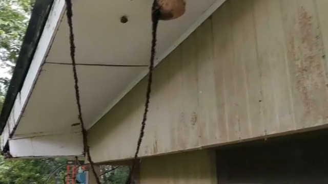 蚂蚁大军用自己的身躯搭起一座吊桥