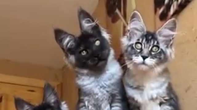 酷!发现被偷拍,猫猫反应超高冷