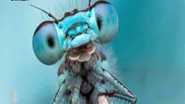这些动物的眼睛,超乎了我们的想象