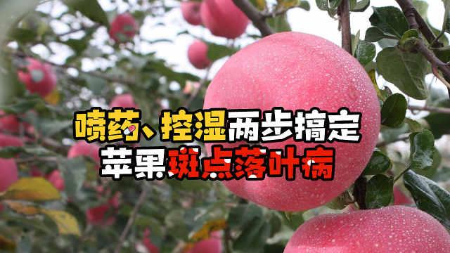 喷药、控湿两步搞定苹果斑点落叶病