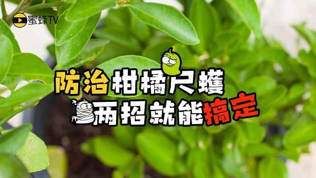 防治柑橘尺蠖,三招就能搞定!
