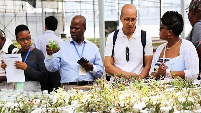 中非农业合作助力非洲减贫发展