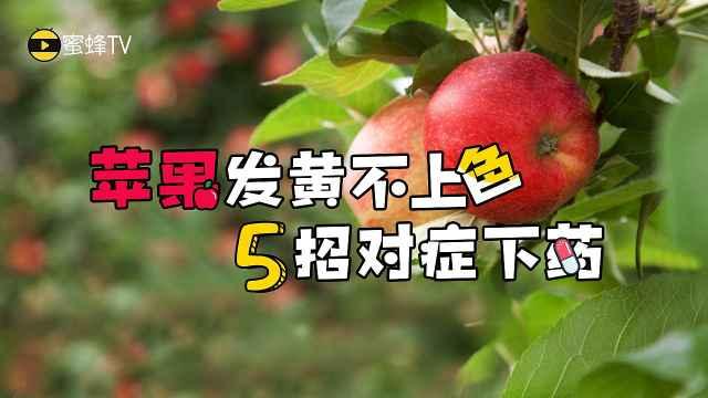 苹果发黄不上色,五招对症下药