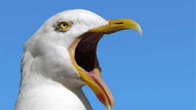 鸟类没有牙齿,到底怎么吃东西的?