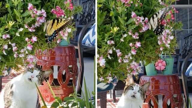 笑死!可爱猫咪看到彩色蝴蝶惊呆了
