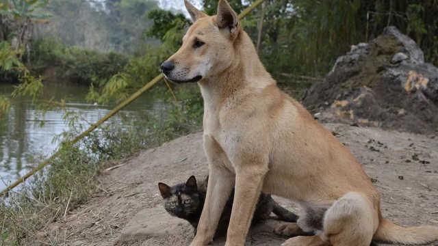 土狗机灵听话为什么警犬不选它们?