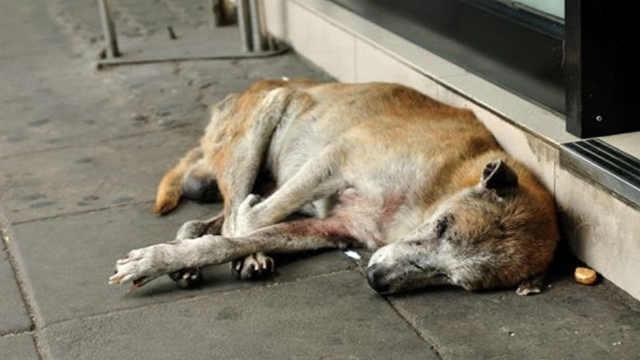 为什么狗狗临死前,会选择离家出走