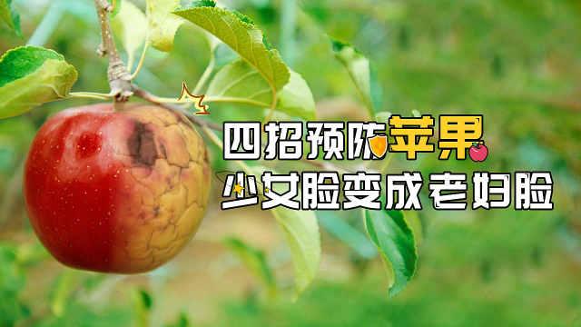 苹果摘袋后突然皱缩是怎么回事?