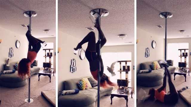 醉了!主人跳钢管舞,鹦鹉各种捣乱