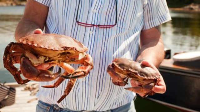 煮熟的螃蟹没肉,怎么挑好螃蟹?