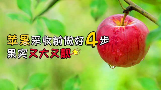苹果采收前做好四步,果实又大又靓