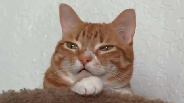 铲屎官进:如何向猫主子介绍新成员