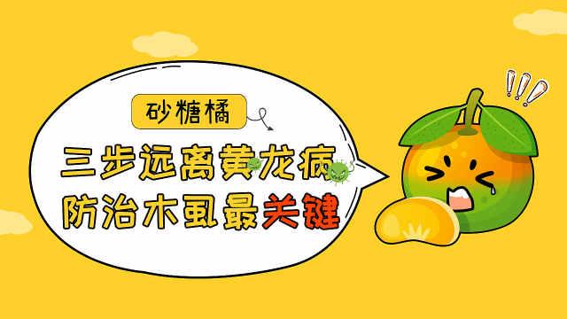 预防砂糖橘黄龙病,先要治木虱