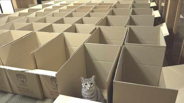 猫都爱玩箱子?那碰到这种还喜欢吗?