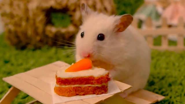 超精致!给仓鼠做迷你胡萝卜蛋糕