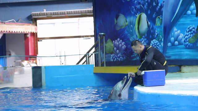 32岁驯兽爸爸自曝:海豚比孩子金贵