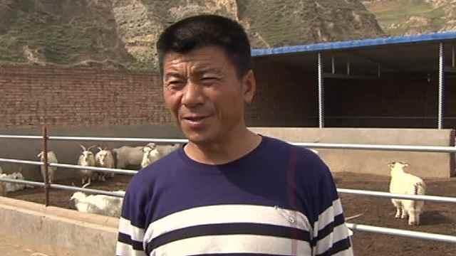 他领办合作社,帮百户村民卖羊致富