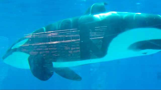 游圣地亚哥海洋世界给海狮海豹喂食