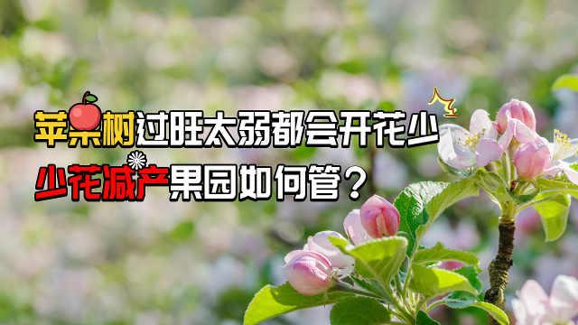 苹果树开花少减产的果园如何管理?