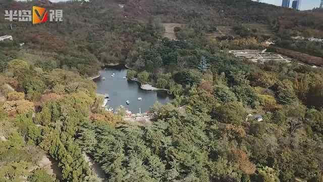 俯瞰青岛中山公园的绝美金秋
