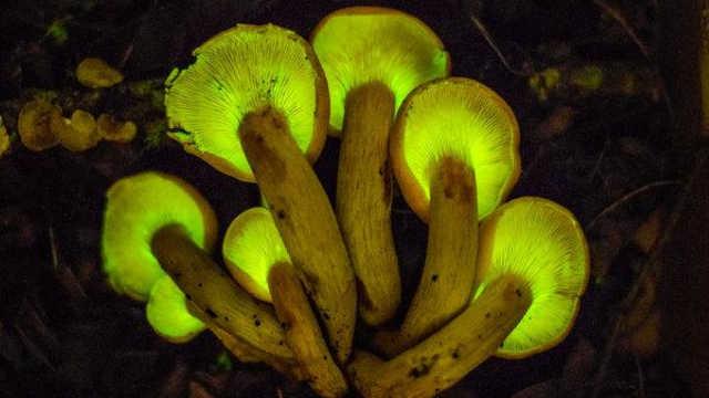 """脑洞大开,蘑菇变成""""发电机"""""""