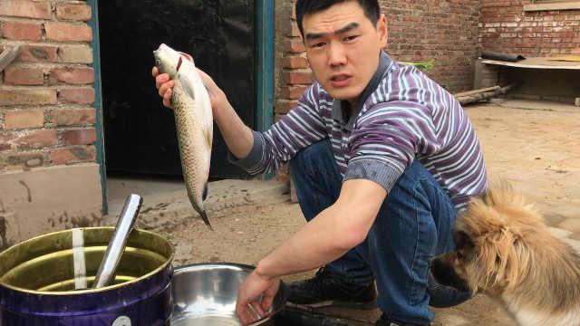 一口铁锅炖草鱼,柴火炖出大滋味