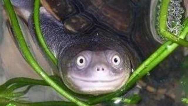 乌龟长寿秘诀是什么?我能长寿吗?