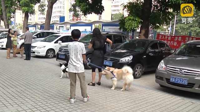 这样养狗小区更和谐!