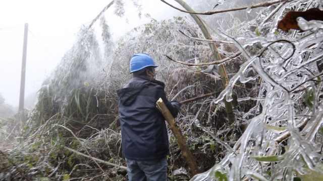 毛竹冰冻压电线,工人钻林砍树500棵