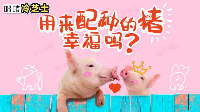 种猪的日常生活是怎样的?