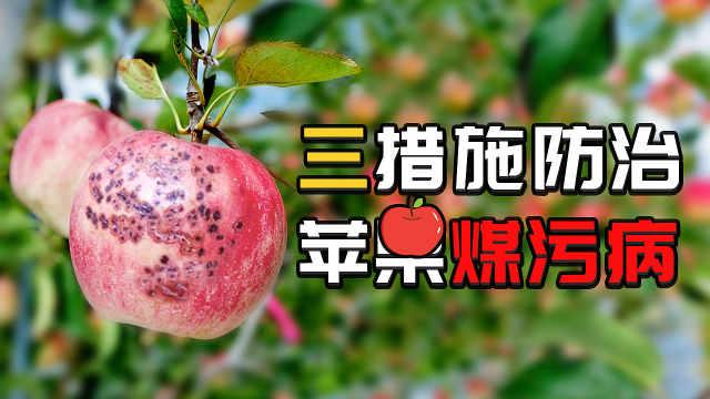 苹果煤污病影响果实外观,三招防治