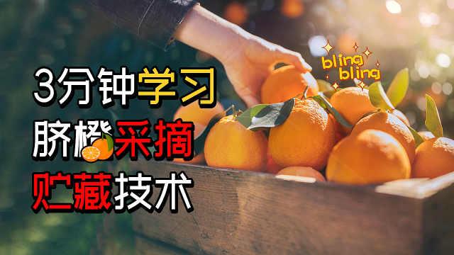 3分钟学习脐橙采摘和贮藏技术