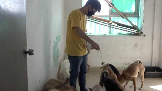 小伙辞职收养22只流浪狗,同吃同住