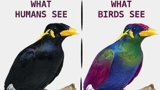 乌鸦竟然不是黑色?人的眼弱爆了!