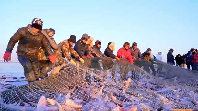 查干湖冬捕,今年又是大丰收
