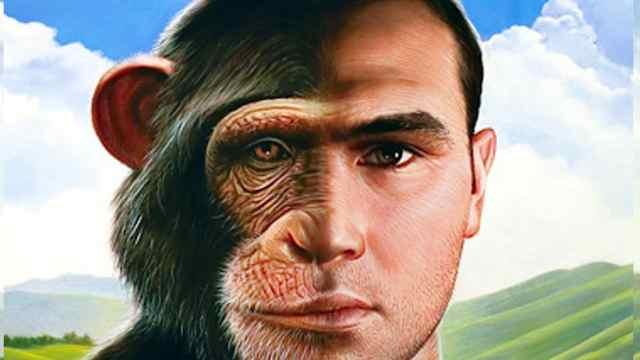 你身上就有人从猴子进化过来的证据