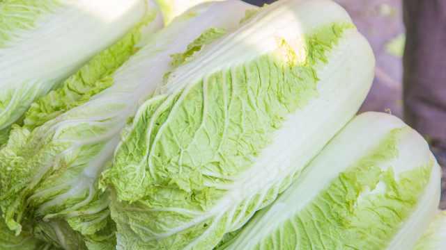 蔬菜小百科之大白菜