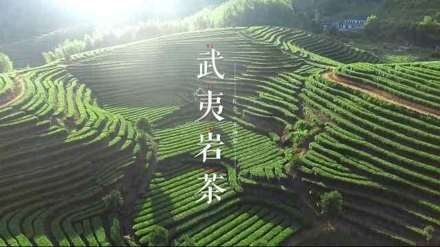 一道武夷岩茶的匠心焙制