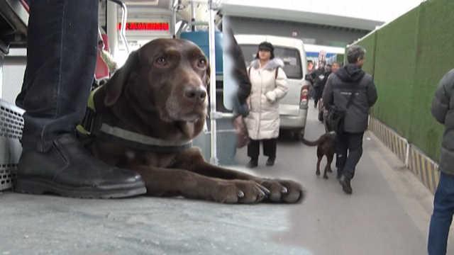 导盲犬乘坐客车遭拒,乘客看法不一