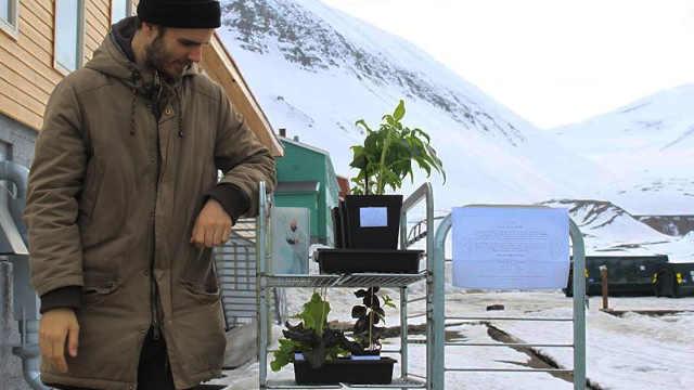 厨师在北极小城开设农场种植蔬菜