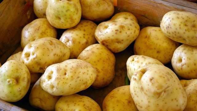 粮食小百科之土豆