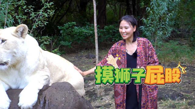 小姐姐在動物園徒手摸獅子的屁股