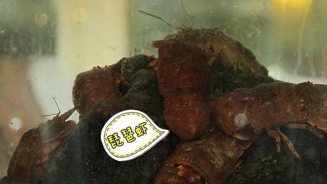 来到越南芽庄必吃的独特象拔蚌