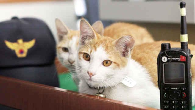 公然吸猫的韩国警局,简直太有爱了