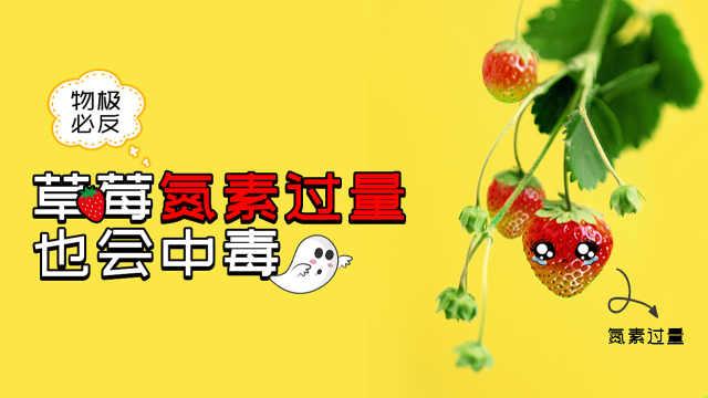 草莓缺氮补氮要适量,过量易中毒
