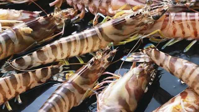 海鲜小百科之基围虾